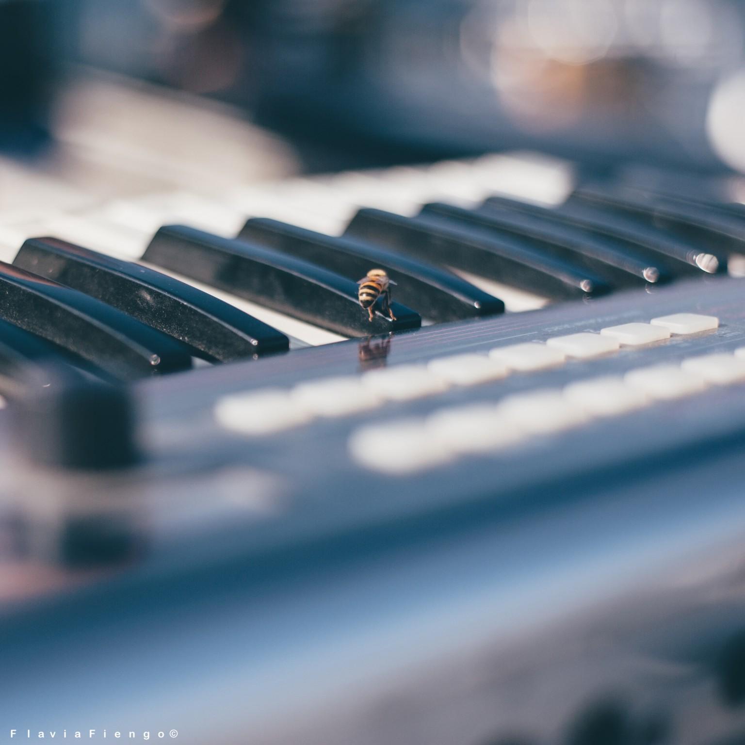 Flavia_Fiengo_soundcheck_2018_t00029
